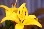 100603_Flower+a.jpg